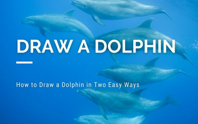 How to Draw a Dolphin in Two Easy Ways