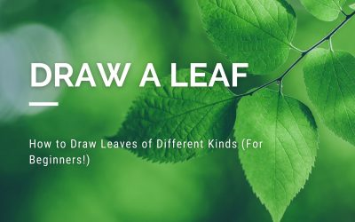 14 Ways on How to Draw Leaves of Different Kinds (For Beginners!)